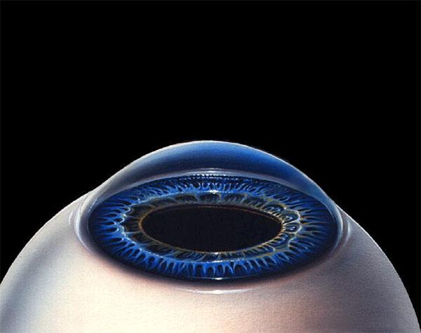 Курс восстановления зрения в.г. жданов торрент
